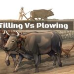 Tilling Vs Plowing   Differences & Similarities